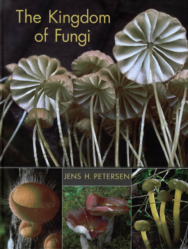 PETERSEN, J.H. - The Kingdom of Fungi